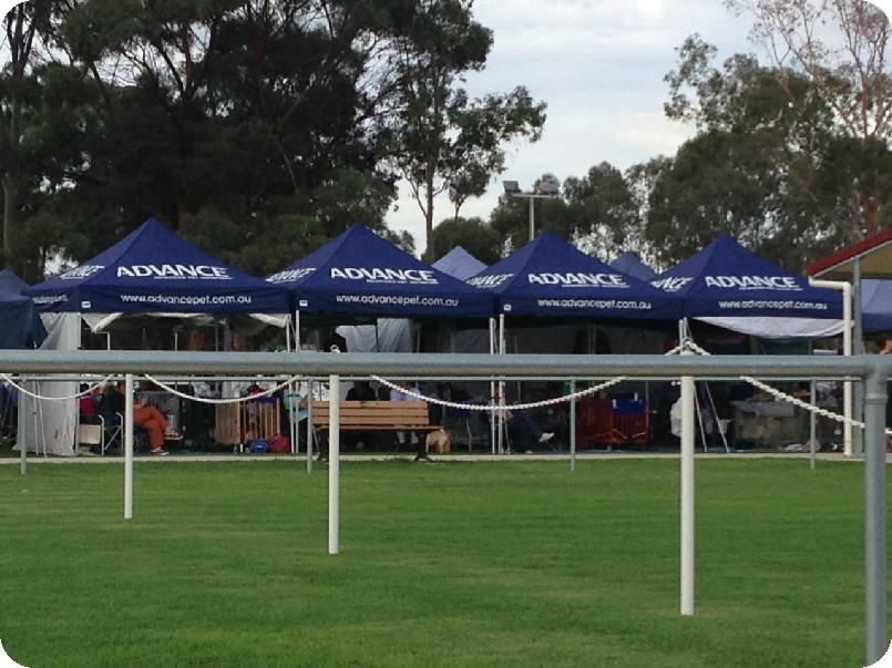 Branded Dog Show Marquee